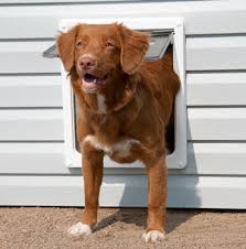 A perfect fitting dog door
